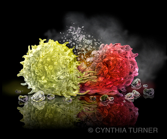 T Cell and Cancer Cell